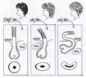 Tipos de desenho de cabelo humano ilustração stock