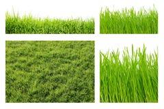 Tipos de grama verde Foto de Stock