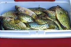 Tipos de peixe pretos Foto de Stock
