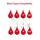 Tipos de sangue bandeira da compatibilidade Gota vermelha 0 do sangue, A, B, AB, setas no branco Projeto liso ilustração do vetor