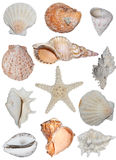 Tipos de shelles   Fotografía de archivo
