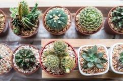 Tipos de Vaious de cactus Imagen de archivo libre de regalías