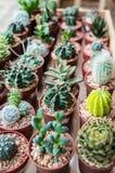Tipos de Vaious de cactus Imagen de archivo