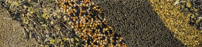 Tipos diferentes da alimentação animal para o fundo imagens de stock royalty free