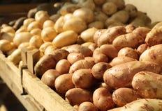 Tipos diferentes da batata no mercado Fotografia de Stock Royalty Free