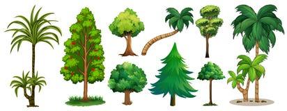 Tipos diferentes de árvores ilustração stock