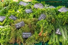 Tipos diferentes de ervas frescas imagens de stock