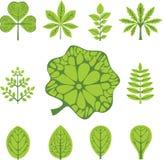 Tipos diferentes de folhas Fotos de Stock
