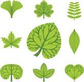 Tipos diferentes de folhas Imagens de Stock Royalty Free