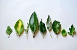 Tipos diferentes de folhas no fundo branco imagens de stock royalty free