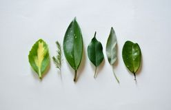 Tipos diferentes de folhas verdes foto de stock royalty free