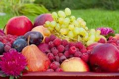 Tipos diferentes de fruto e de framboesa Imagens de Stock Royalty Free