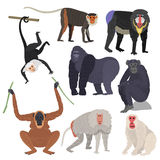 Tipos diferentes de grupo animal raro do vetor dos macacos Fotografia de Stock