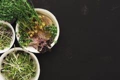 Tipos diferentes de micro verdes Imagem de Stock
