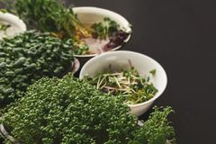 Tipos diferentes de micro verdes Imagem de Stock Royalty Free