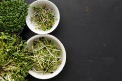 Tipos diferentes de micro verdes Fotos de Stock