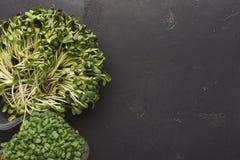 Tipos diferentes de micro verdes Imagens de Stock