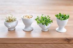 Tipos diferentes de micro verdes nas bacias brancas para molhos no fundo de madeira Produto fresco do jardim crescido organicamen Imagem de Stock