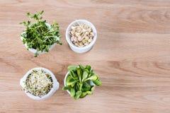 Tipos diferentes de micro verdes nas bacias brancas para molhos no fundo de madeira Produto fresco do jardim crescido organicamen Imagens de Stock Royalty Free