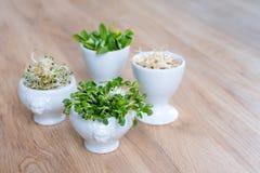 Tipos diferentes de micro verdes nas bacias brancas para molhos no fundo de madeira Produto fresco do jardim crescido organicamen Fotografia de Stock