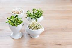Tipos diferentes de micro verdes nas bacias brancas para molhos no fundo de madeira Produto fresco do jardim crescido organicamen Foto de Stock