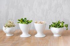 Tipos diferentes de micro verdes nas bacias brancas para molhos no fundo de madeira Produto fresco do jardim crescido organicamen Imagem de Stock Royalty Free