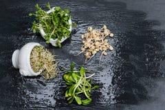 Tipos diferentes de micro verdes nas bacias brancas para molhos no fundo molhado da ardósia Produto fresco do jardim organicament Imagens de Stock