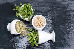 Tipos diferentes de micro verdes nas bacias brancas para molhos no fundo molhado da ardósia Produto fresco do jardim organicament Fotografia de Stock Royalty Free
