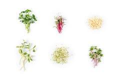 Tipos diferentes de micro verdes no fundo branco Conceito saudável comer do produto fresco do jardim crescido organicamente como Fotografia de Stock Royalty Free