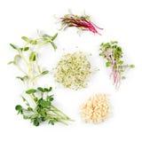 Tipos diferentes de micro verdes no fundo branco Conceito saudável comer do produto fresco do jardim crescido organicamente como Fotografia de Stock