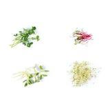 Tipos diferentes de micro verdes no fundo branco Conceito saudável comer do produto fresco do jardim crescido organicamente como Imagem de Stock