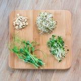 Tipos diferentes de micro verdes no fundo de madeira Conceito saudável comer do produto fresco do jardim crescido organicamente Fotografia de Stock Royalty Free