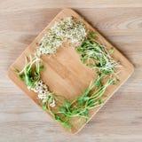 Tipos diferentes de micro verdes no fundo de madeira Produto fresco do jardim crescido organicamente, símbolo da saúde e Fotografia de Stock Royalty Free