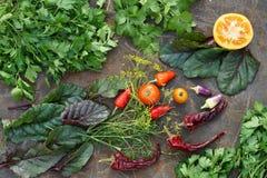 Tipos diferentes de microgreens Salsa fresca, aneto, beterraba de forragem, c Fotografia de Stock Royalty Free