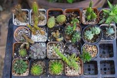 Tipos diferentes de plantas carnudas na loja especial fotografia de stock royalty free