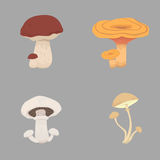 Tipos diferentes dos cogumelos ajuste a ilustração do vetor do cogumelo Imagem de Stock Royalty Free