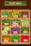 Tipos diferentes dos vegetais em uma caixa Foto de Stock Royalty Free