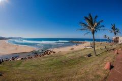 Tips som simmar den blåa havferiestranden Fotografering för Bildbyråer
