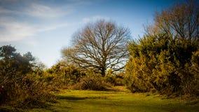 Tiptree-Heide Stockbild
