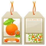 Étiquette de vente des arbres oranges de jeunes plantes Instructions pour planter l'arbre Photo libre de droits