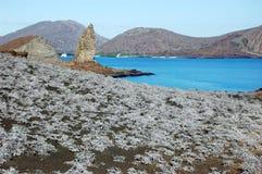 Tiquilia plante, avec la roche de sommet, Sullivan Bay, Galapagos photographie stock