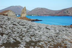 Tiquilia plants, with Pinnacle rock, Sullivan Bay, Galapagos. Tiquilia plants on volcanic soil, with Pinnacle rock in the distance, Sullivan Bay, Galapagos Stock Photography