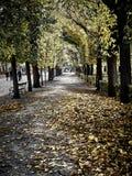 Tiré d'une rue complètement des feuilles rouges au parc photographie stock