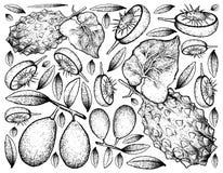 Tiré par la main d'Ambarella et de melon à cornes sur le fond blanc Images stock