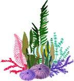Tiré par la main dans l'élément naturel du monde de mer d'aquarelle Compositions avec des poissons, seaplant et coraux sur le fon illustration de vecteur
