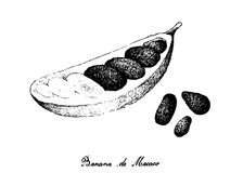 Tiré par la main de Banana de Macaco Fruits sur le fond blanc illustration libre de droits