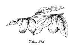 Tiré par la main des fruits chinois de date sur le fond blanc illustration stock