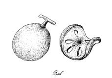 Tiré par la main des fruits de Bael sur le fond blanc illustration de vecteur