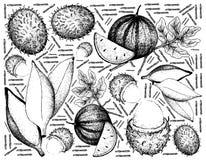 Tiré par la main du fruit frais sur le fond blanc illustration de vecteur