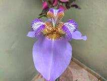 Tir étroit d'orchidée pourpre extérieure photographie stock